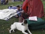 Occupydog
